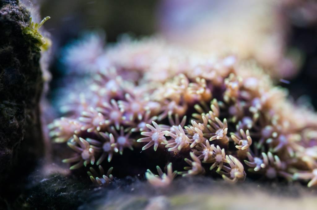 Mon Open Reef 91 - Nouvelle Vidéo p13 - Photos de macro p10 - Page 3 Ba22030991cb036dae077c0f827e6990_zps236f6fa1