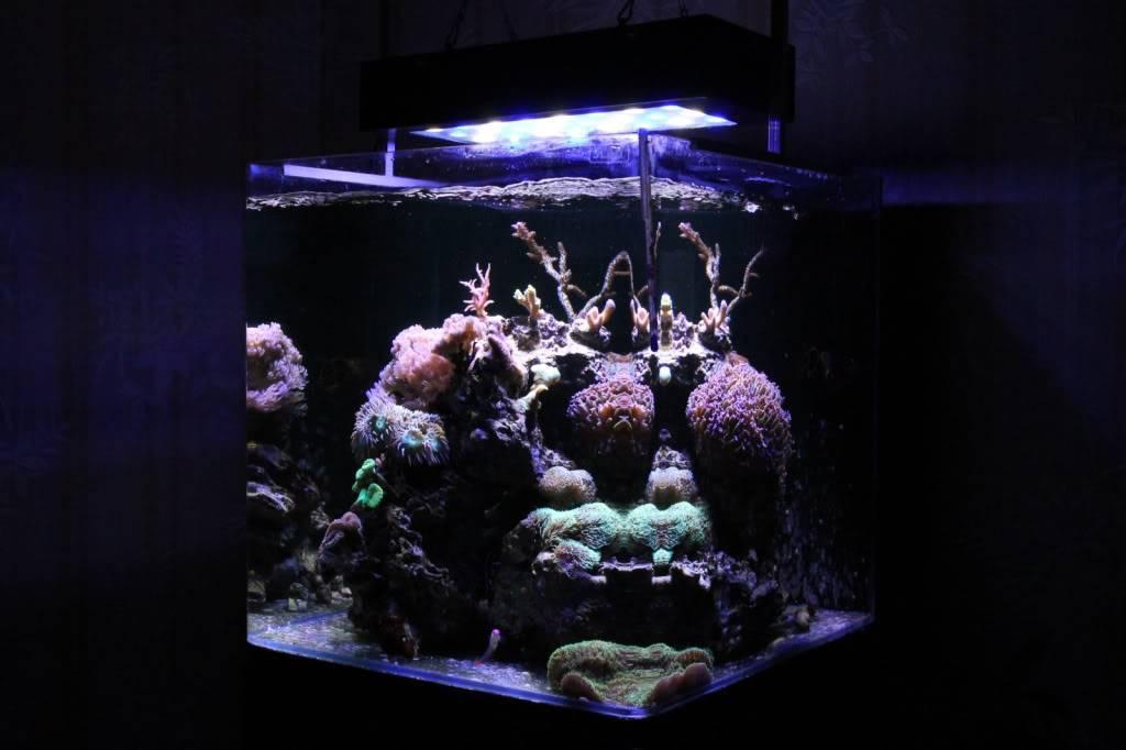 Mon Open Reef 91 - Nouvelle Vidéo p13 - Photos de macro p10 - Page 6 Ed2ad6f0393a2574f7c54581e6f3b221_zpsf21be76b