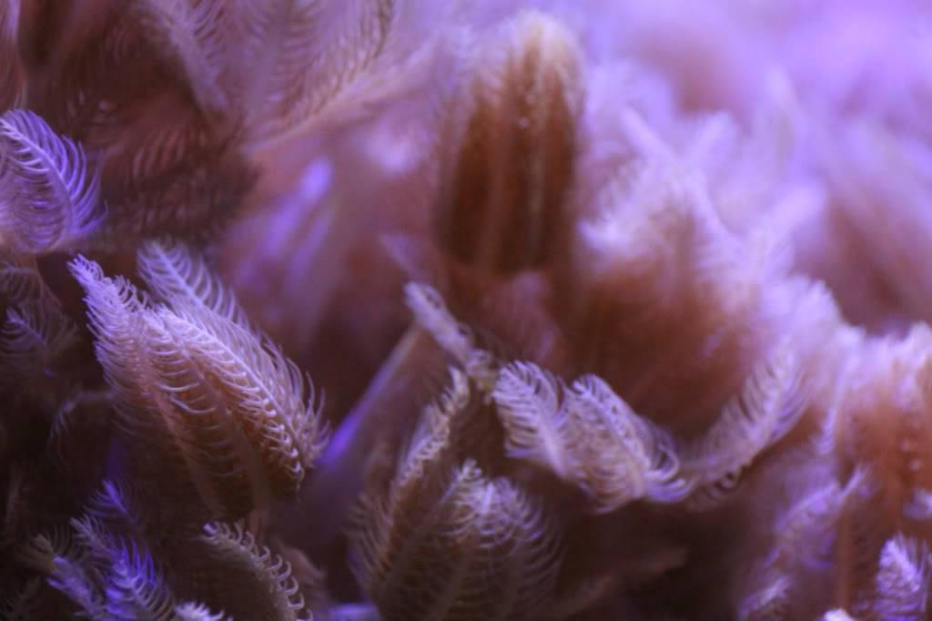 Mon Open Reef 91 - Nouvelle Vidéo p13 - Photos de macro p10 - Page 6 Efb3cb63142b93f94c2869364a0c6ef1_zps4b9b14a5
