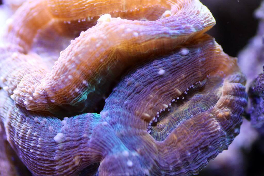 Mon Open Reef 91 - Nouvelle Vidéo p13 - Photos de macro p10 - Page 9 Image_zpsb50a59a0