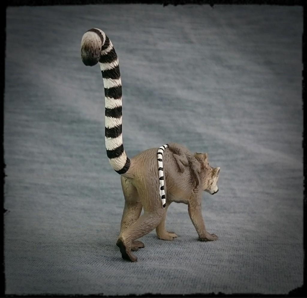 Mojo 2015 - Female Ring-tailed Lemur with baby - Walkaround by Kosta 2_zpsbenawsyo