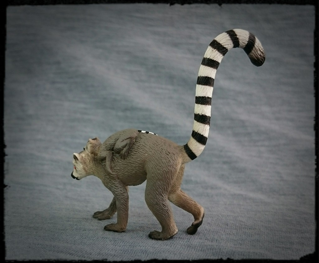 Mojo 2015 - Female Ring-tailed Lemur with baby - Walkaround by Kosta 4_zpsn2kjyabj