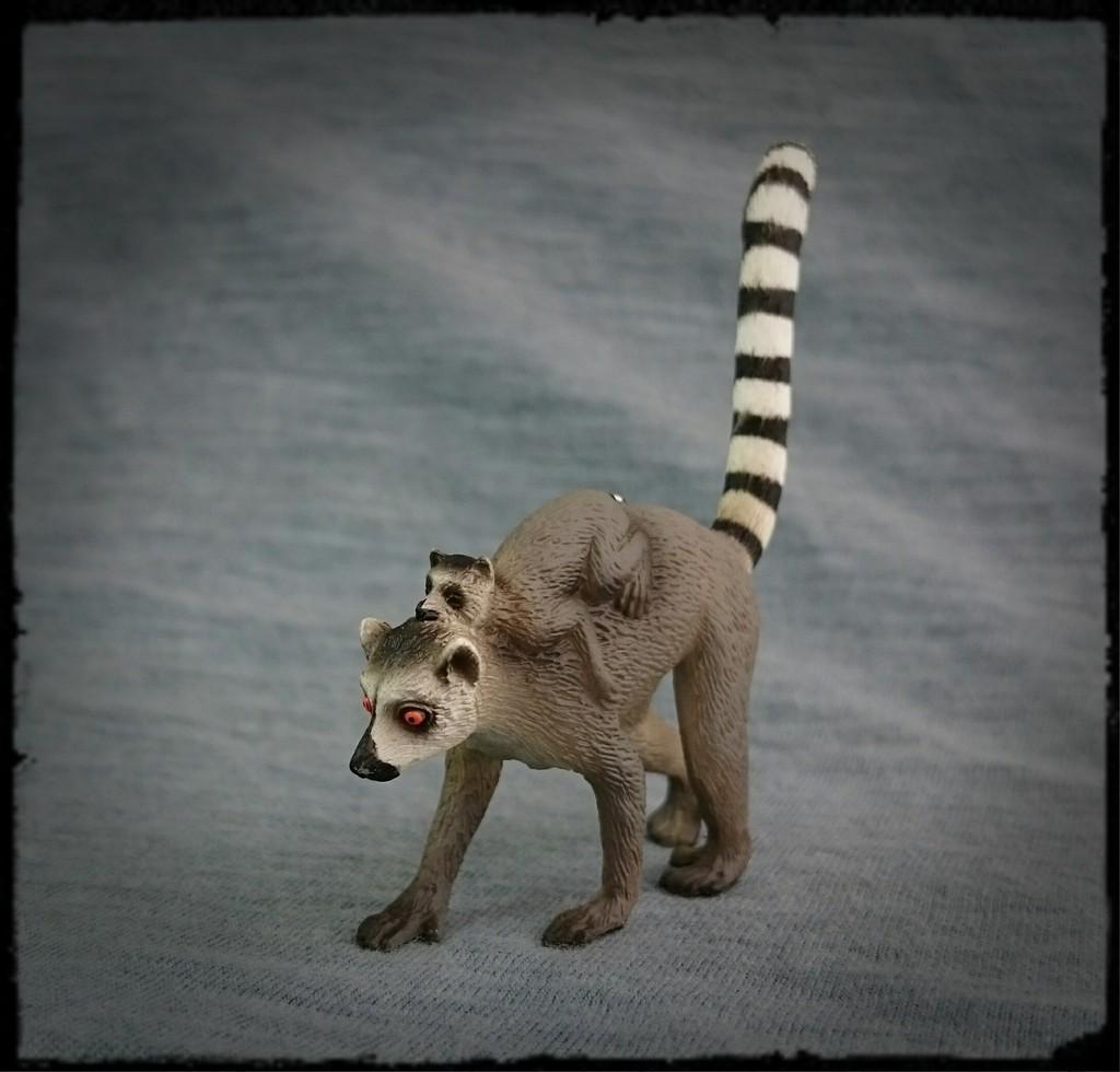 Mojo 2015 - Female Ring-tailed Lemur with baby - Walkaround by Kosta 6_zpsrjgw3bq4