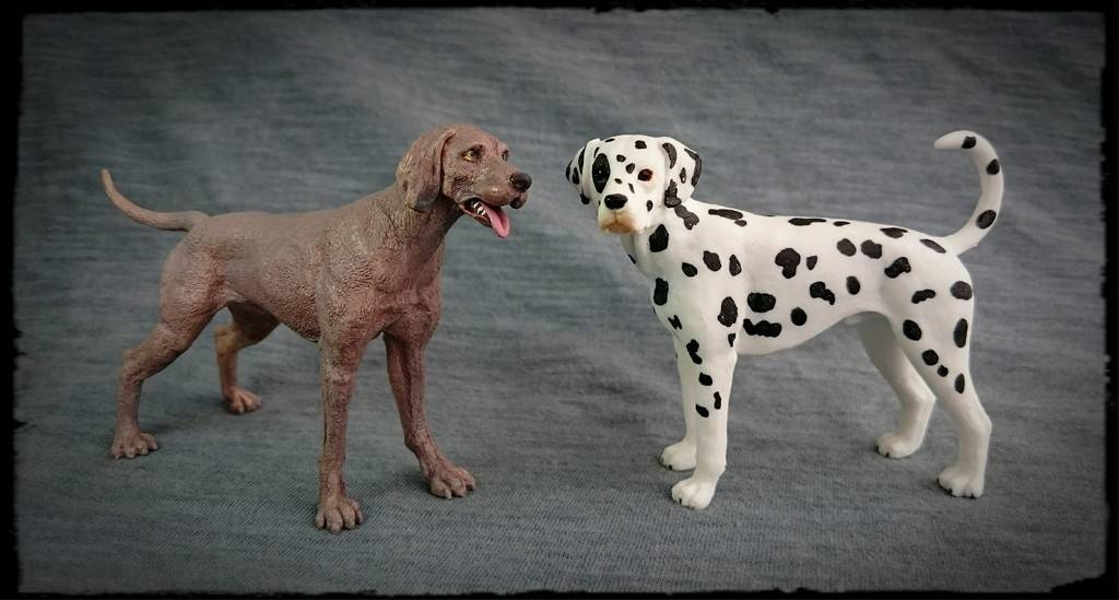 Mojo 2016 - Dalmatian dog - Walkaround by Kosta 8_zpsuhpvpqws