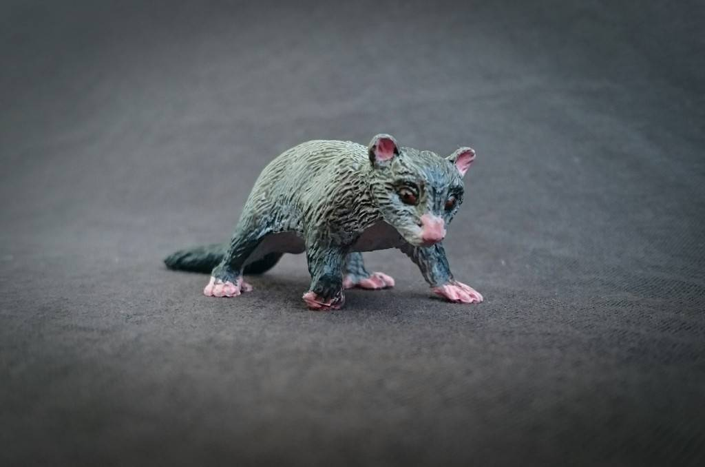 Southlands Replicas - Mountain Brushtail Possum 10_zpsuaup8ps9