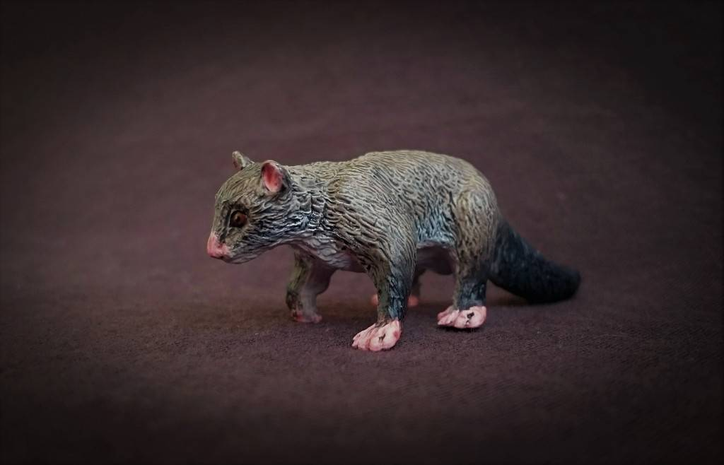 Southlands Replicas - Mountain Brushtail Possum 8_zpsoaejlhif