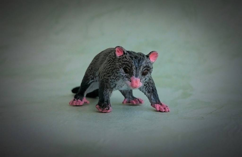 Southlands Replicas - Mountain Brushtail Possum 9_zpsnek7tqzb