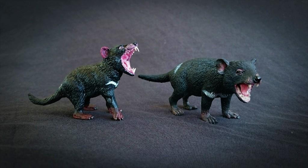 Southlands Replicas - Tasmanian Devil Male 11_zpstt7zv9hu