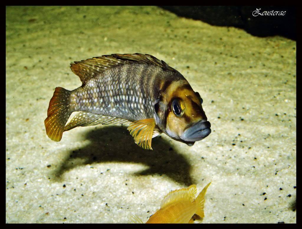 Mi acuario y peces DSCF4294copia