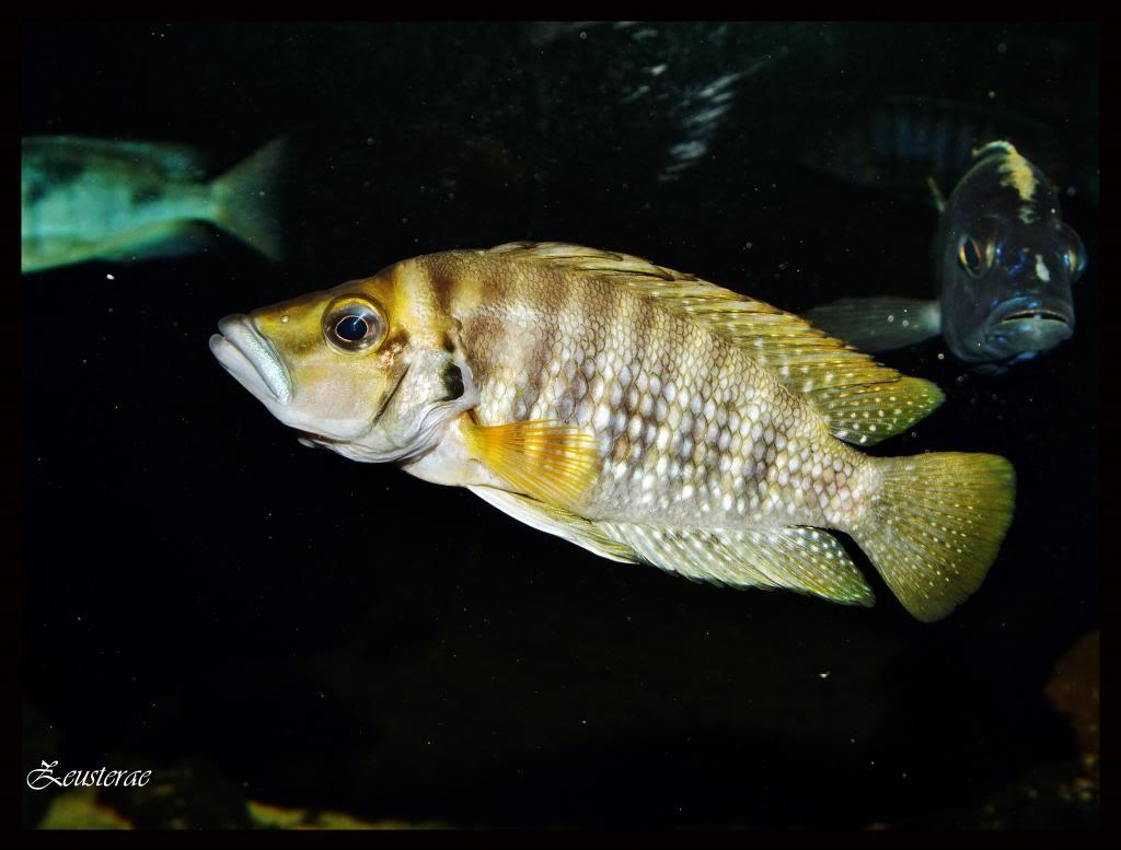 Mi acuario y peces DSCF4304copia