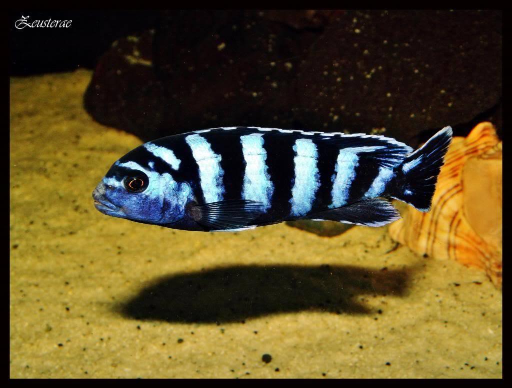 Mi acuario y peces DSCF4321