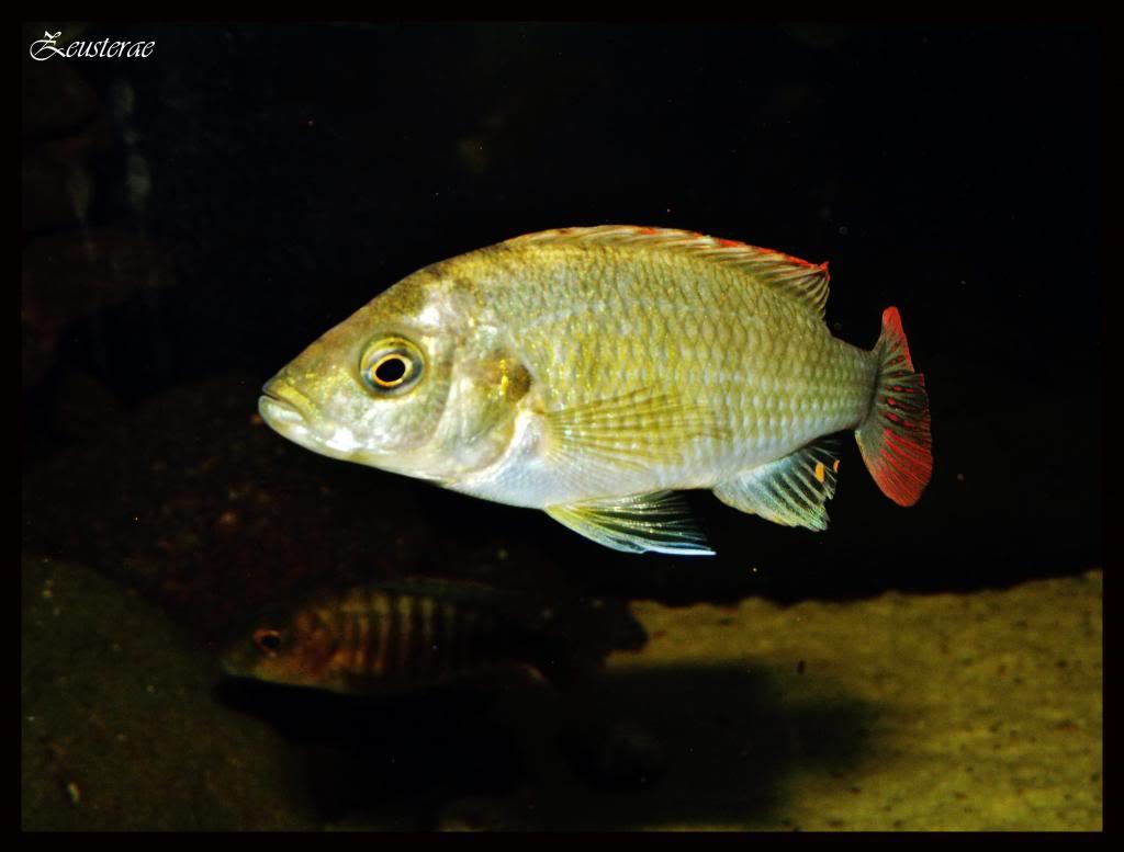 Mi acuario y peces DSCF4324