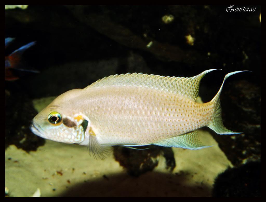 Mi acuario y peces DSCF4350