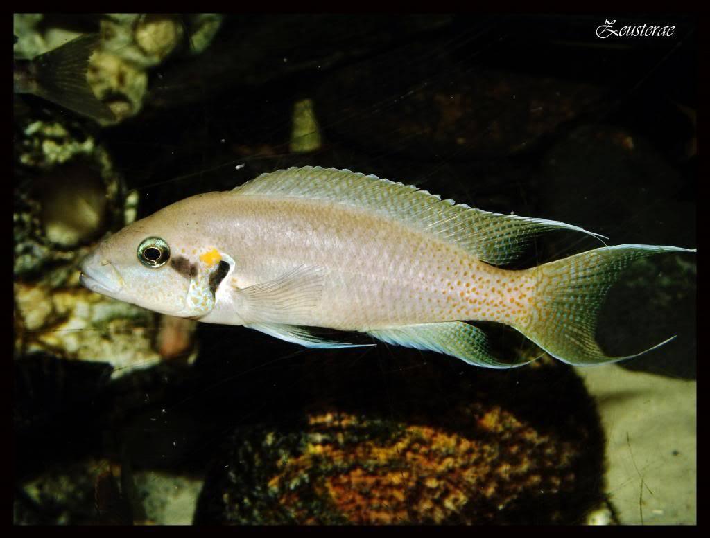 Mi acuario y peces DSCF4362