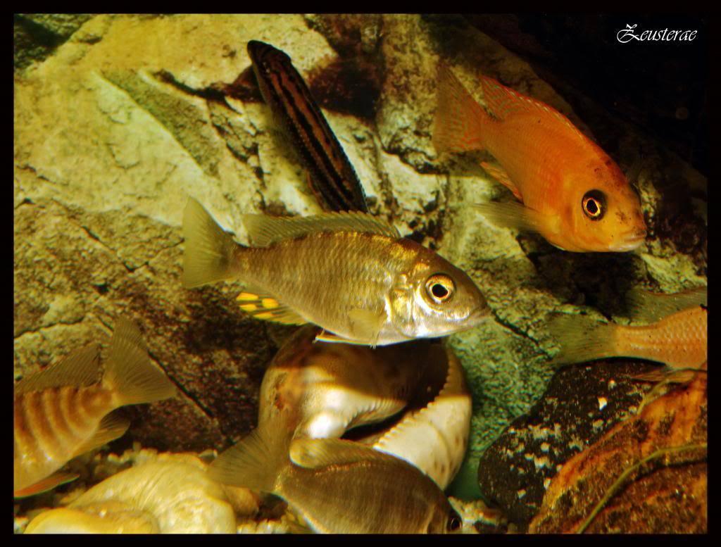Mi acuario y peces DSCF4380
