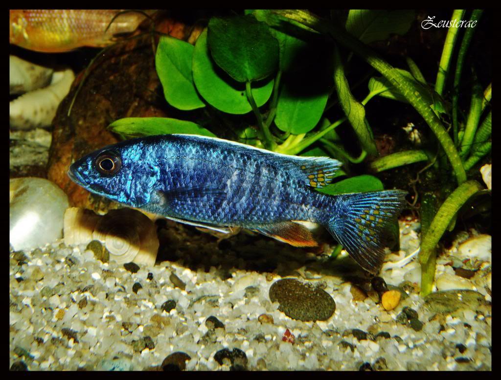 Mi acuario y peces DSCF4407