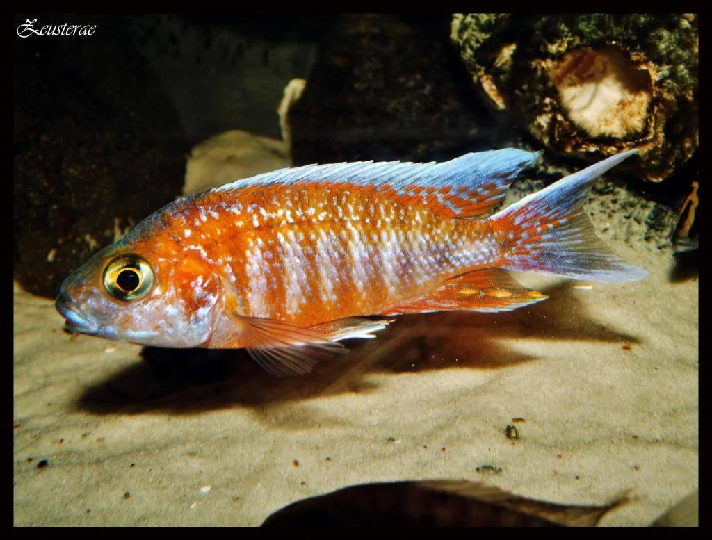 Mi acuario y peces DSCF4425