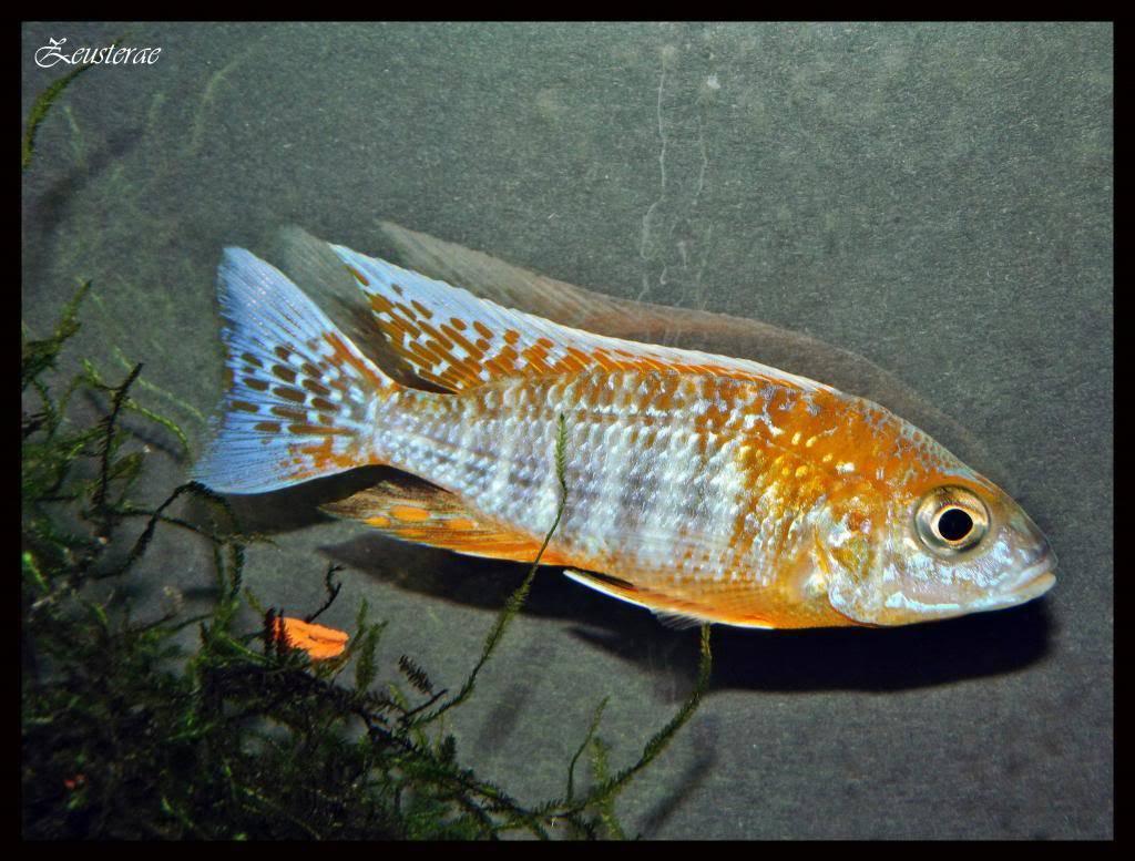 Mi acuario y peces DSCF4457