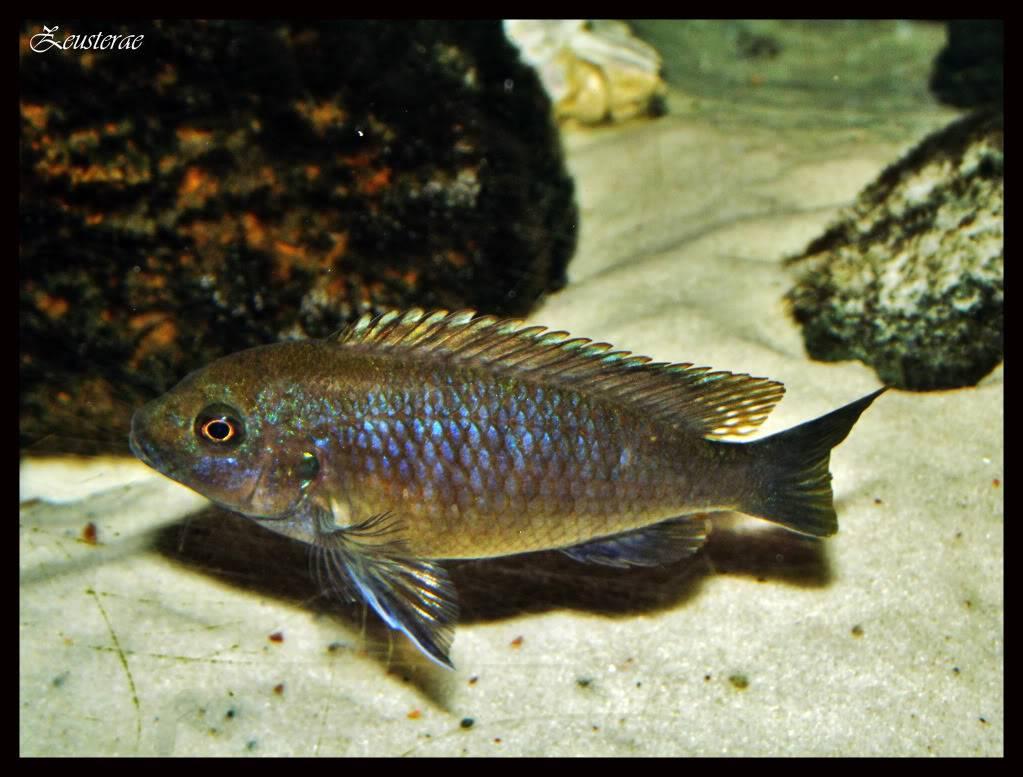 Mi acuario y peces DSCF4469b