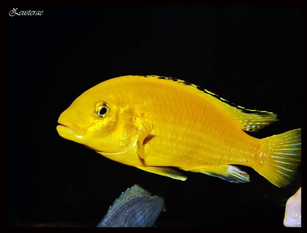 Mi acuario y peces DSCF4474