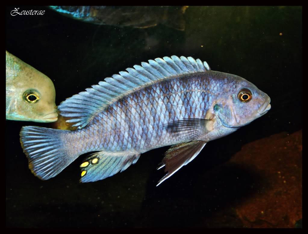 Mi acuario y peces DSCF4475