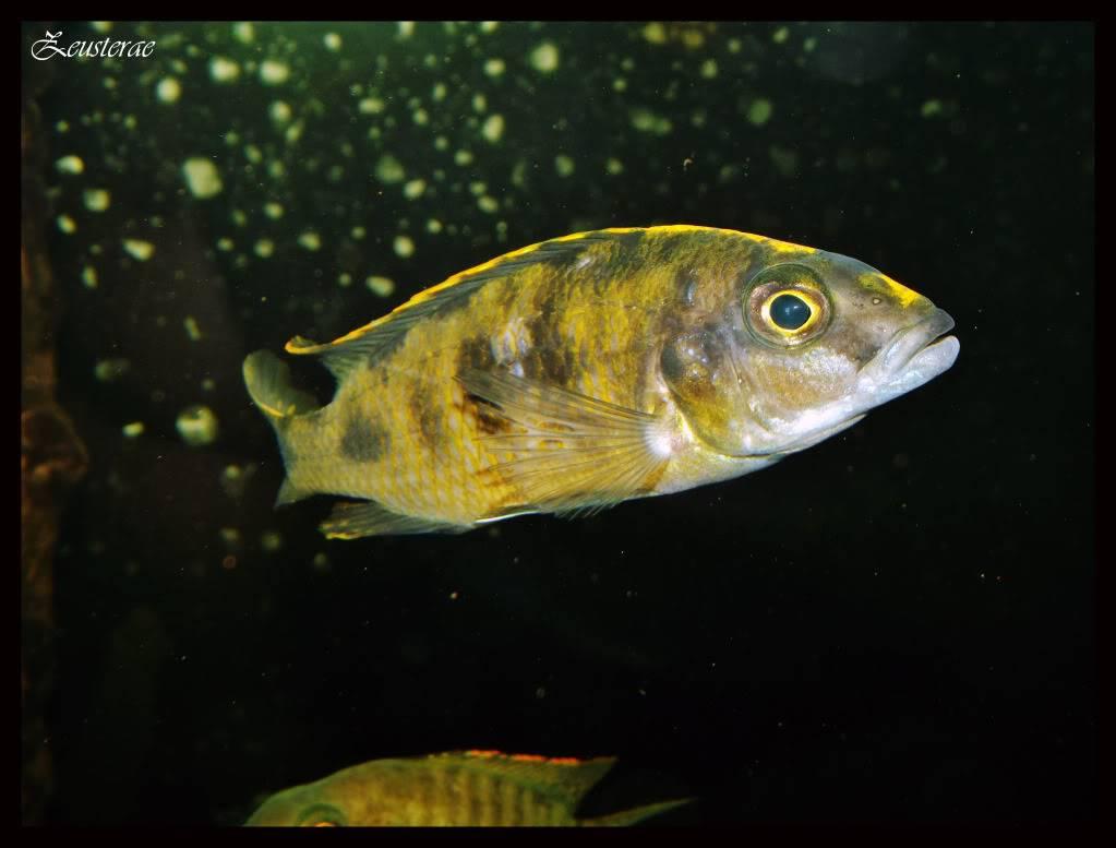 Mi acuario y peces DSCF4477
