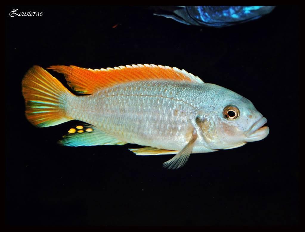 Mi acuario y peces DSCF4479
