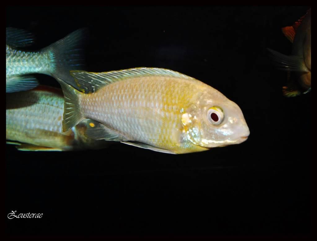 Mi acuario y peces DSCF4482
