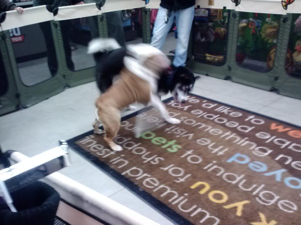 Loki's Scrapbook  0214131907_zps05f8574a