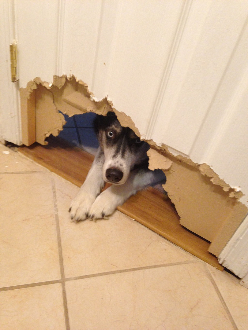 What is the most expensive item your puppy destroyed?  - Page 4 IMG_1234_zpsrowuac2o