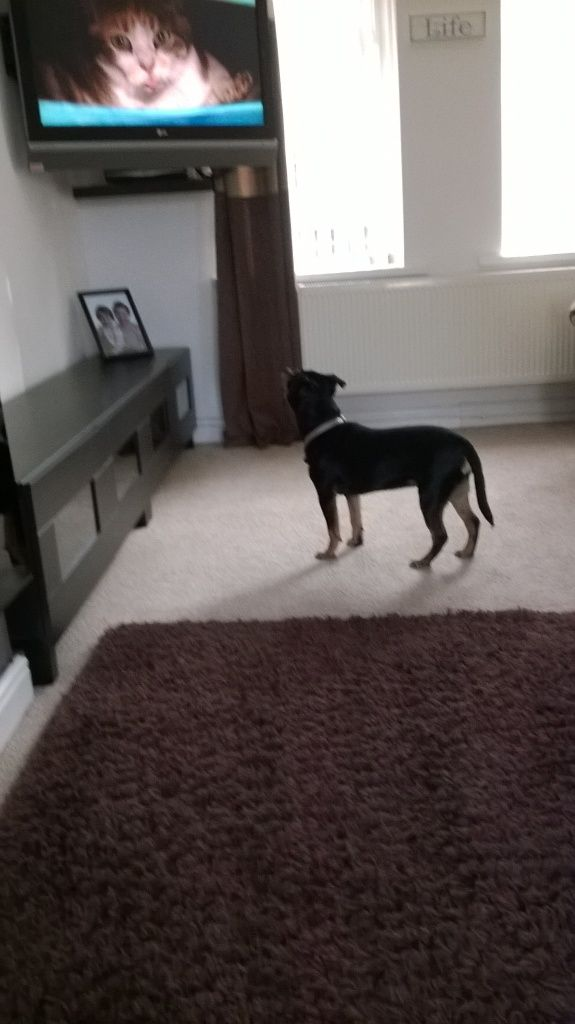 kizzy is a telly watcher [ Temporary_zps4cc4d267
