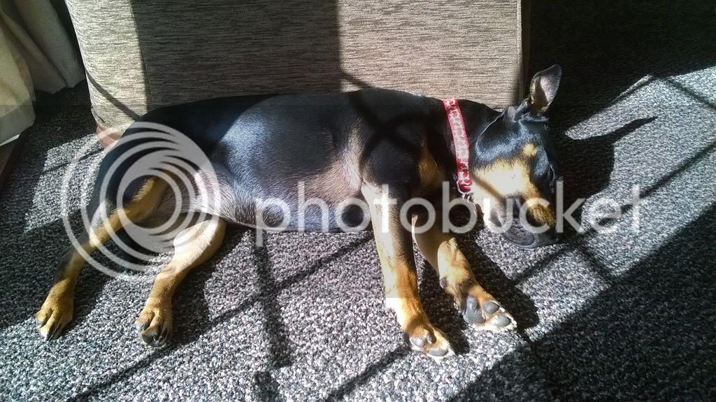 kizzy having a nice sleep in the sun Temporary_zpsqpjlcub4