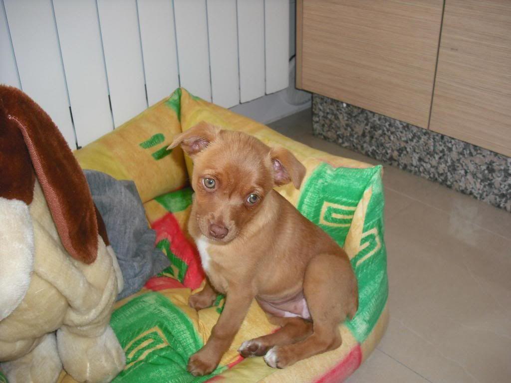 Sus mascotas - Página 5 Arya_zpse5998722