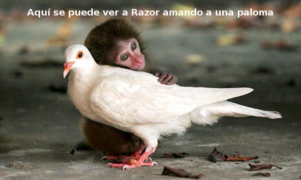 ¡Feliz cumpleaños Razor! Paloma_zpse39ff5c2