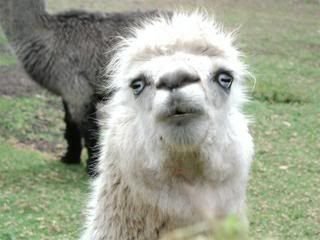 Britain heading into the worst recession in the world... UglyLlama