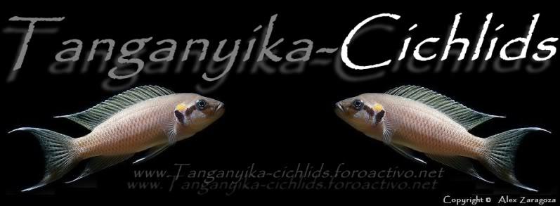 tanganyikacichlids.foroactivo.net