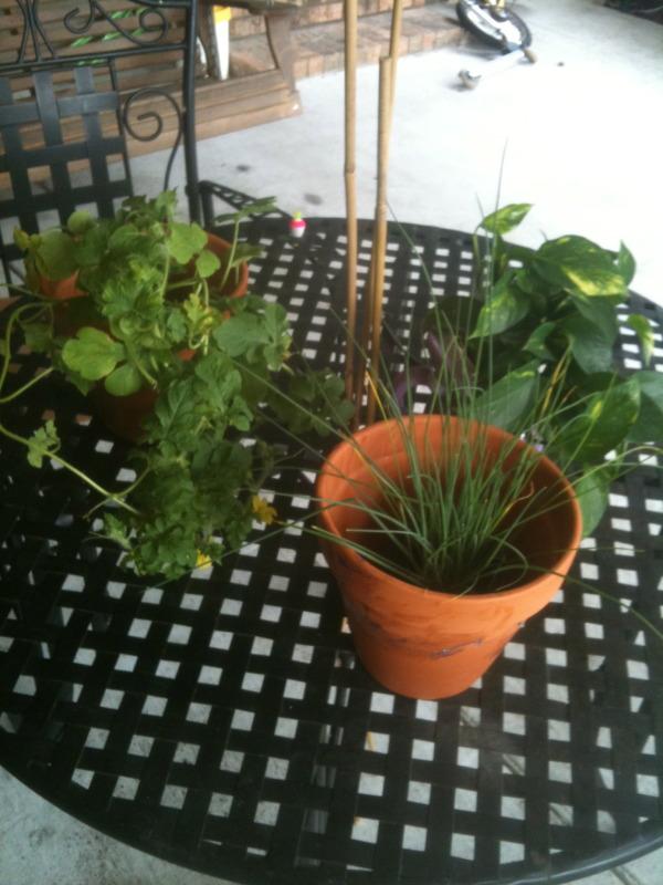 Coastal & Tropical South: June Garden Updates! IMG_3766
