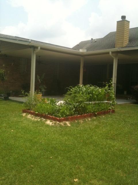 Coastal & Tropical South: June Garden Updates! Photo-153