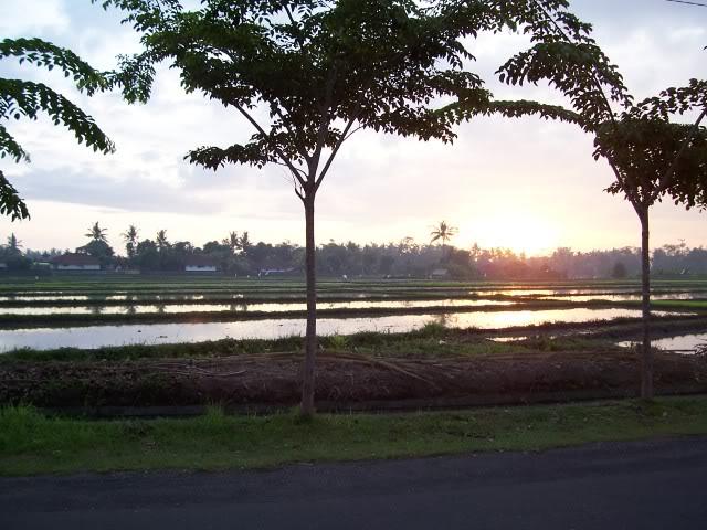 அழகான நெல் வயல்கள்2 - Page 2 PaddyField-Bali