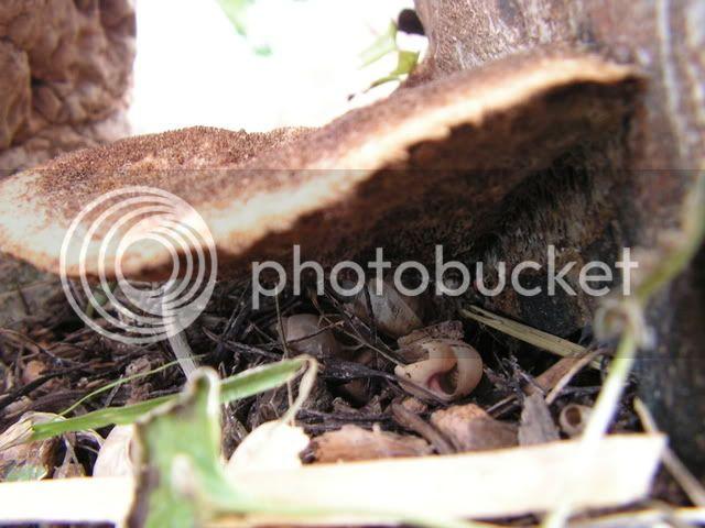 Seta letal para árboles? (Julián) PICT0003