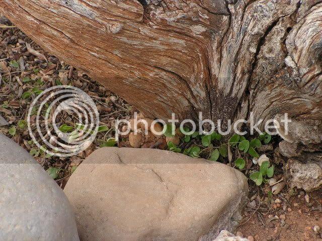 Seta letal para árboles? (Julián) PICT0007