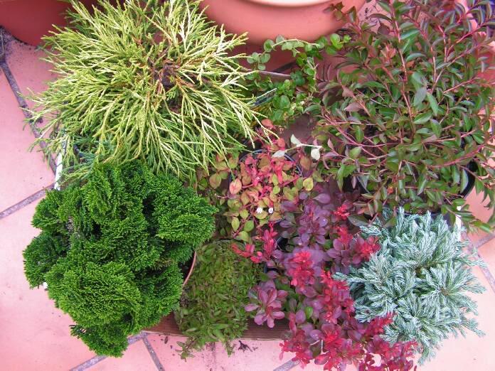 Jardinera sobreelevada: - Página 2 PICT0205