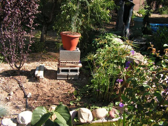 Jardinera sobreelevada: Jardineracedro1