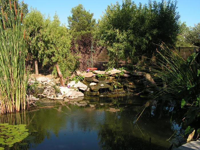 Jardinera sobreelevada: Jardineracedro4