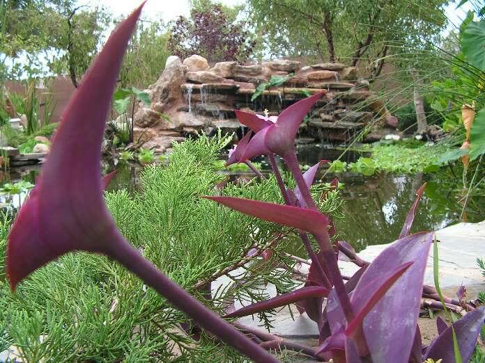 Jardinera sobreelevada: - Página 2 PICT0028