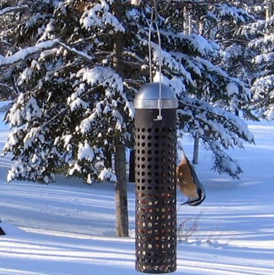 Mes oiseaux aux mangeoires 12-01-2009083