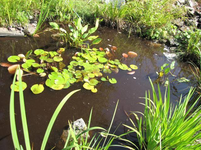 Bassin Bassinetargile06-08-2014