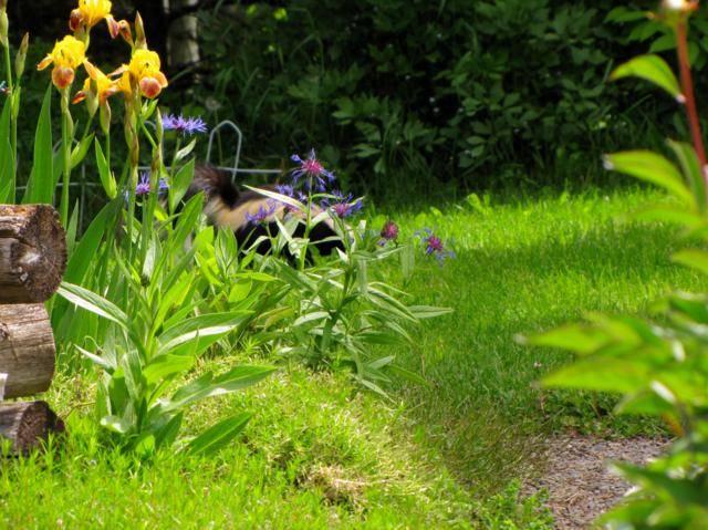 Visite dans mon jardin IMG_0104_640x479