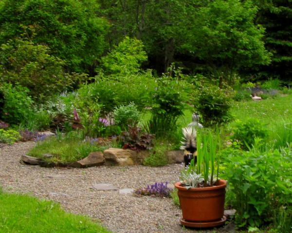 Visite dans mon jardin Visite%20au%20jardin%20mouffette%202015