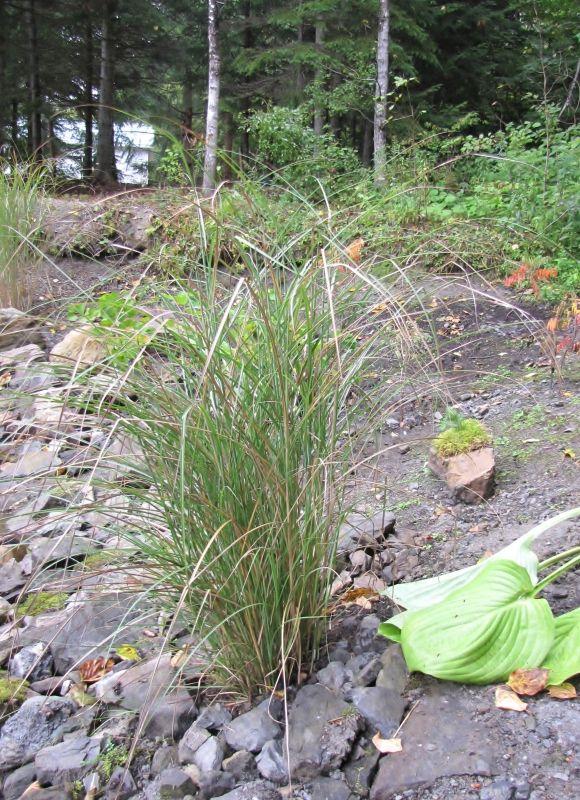 Identification Kleine Fontaine - Kleine Silberspinne IMG_9729